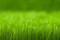 Green grass. Green background with fresh natural grass Stock Image
