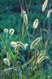 Green grass. Grass at sunset, natural light stock images
