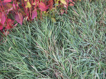 Green grass. Stock Photography