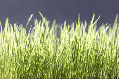 Green grass. Greea grass royalty free stock photography