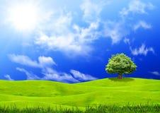 Free Green Grass Stock Image - 21954251