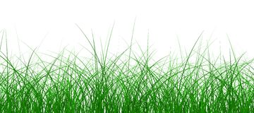 Green grass. Isolated on a white. 3d image Stock Photos