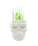 Green grass. In pot of skull isolated on white stock image