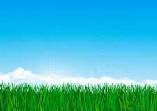 Green grass. Vector background of spring landscape of green grass on blue sky with sunbeames and clouds Stock Photos