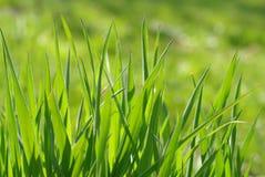 Green grass. Close-up of green grass Stock Photos