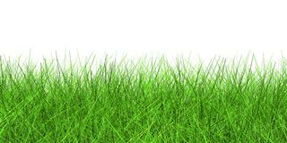 Green grass. On a white background Stock Photo