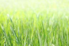 Green grass. With sun light Stock Photo