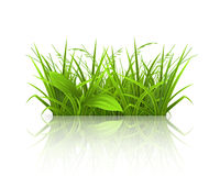 Green grass. Illustration on a white background Stock Photos