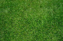 Green grass. Nature green grass background texture Royalty Free Stock Image