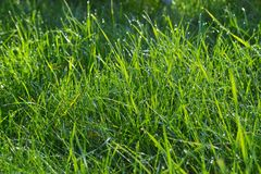 Green grass. Carpet of the green grass Stock Photo