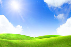 Green grass. With blue sky Stock Photography
