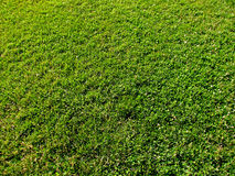 Green grass. Small area of a green mowed lawn Royalty Free Stock Photos