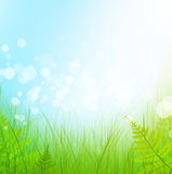 Green grass. Meadow over blue sky background Royalty Free Stock Photo