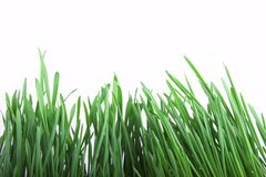 Green grass. On white background Stock Images