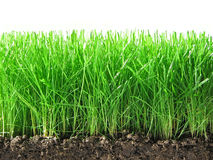 Green grass. Green grass with ground and roots isolated on the white background Stock Photo