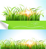 Green grass. On a background of bright sunlight.  Vector illustration Royalty Free Stock Photo