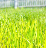 Green grass. In the sunny day stock photo