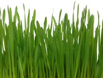 Green grass. On white background Stock Photo