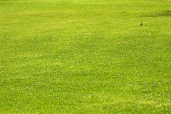 Green grass. Of golf course in Africa Stock Photography