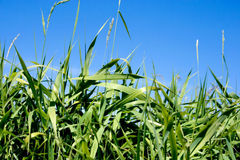 Green grass. Nature background summer Stock Photo