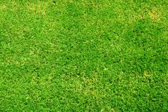 Free Green Grass Royalty Free Stock Photo - 285035