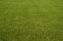 Free Green Grass Stock Photo - 2994480