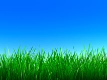 Free Green Grass Stock Image - 3229351