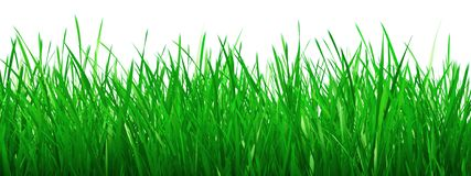 Free Green Grass Royalty Free Stock Photos - 3231808