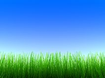 Green grass. Green color grass on blue sky Stock Images