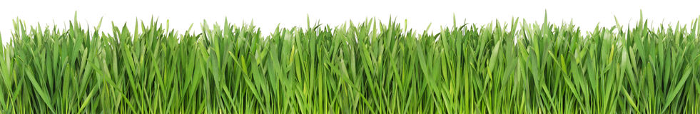 Free Green Grass Royalty Free Stock Images - 3976829