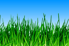 Green grass. Fresh green grass against blue sky royalty free stock photo