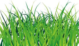 Green grass. Vectorial green with a white background stock illustration