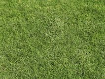 Green grass. Freshly cut field of green grass Royalty Free Stock Image
