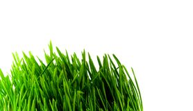 Green grass. Close-up over white Royalty Free Stock Image