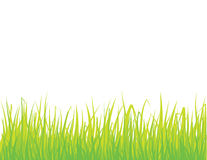 Green grass. Vector illustration of isolated fresh grass Royalty Free Stock Photography