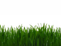 Green grass. Isolate on white background royalty free stock photos