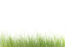 Green grass. On a white background Stock Photos