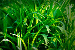 Green grass. Background - close up stock images
