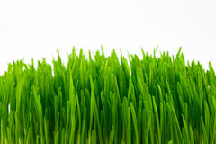 Green grass. Green juicy bright grass isolated on white Royalty Free Stock Photos
