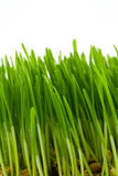 Green grass. Green juicy bright grass isolated on white Stock Photo