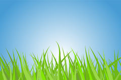 Green grass. Illustration of a green grass with nice blue sky and rising sun royalty free illustration