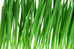 Green grass. Isolated on white background Royalty Free Stock Photos