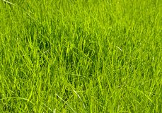 Green grass. The spring green grass textures stock photo