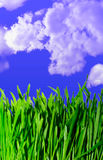 Green grass. Against sky background Royalty Free Stock Images