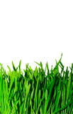 Green grass. On the white background, isolated Stock Photos
