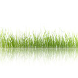 Green grass. Isolated on a white background and reflected stock photography