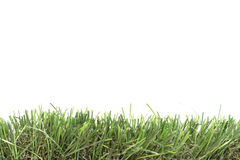 Green grass. Isolated on the white background Stock Images