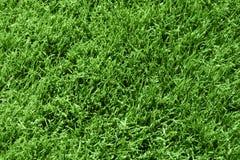 Green Grass. Lush green grass background texture Stock Photos