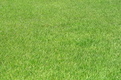 Green grass. Can serve as nature background Stock Photo