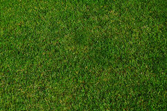 Green grass. Texture useful as background Royalty Free Stock Photo